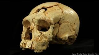 Cráneo de la Sima de los Huesos