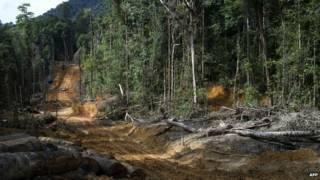 Desmatamento na Indonésia (AFP)