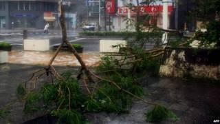 درخت شکسته از توفان نئوگوری