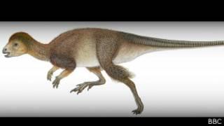 Nau'in kadangaren Dinosaurs mai gashi a jikinsa