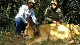 गुजरात, गिर, शेर