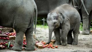 Elefante   AFP