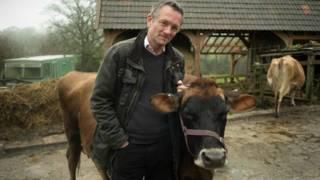 मोसली, गाय