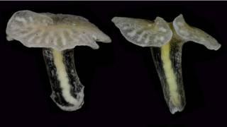 """Глубоководные """"грибы"""""""