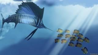 Рыба-парусник преследует стайку мелкой рыбешки