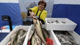 Рыба в Петербурге