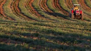 Plantação brasileira de café (Reuters)