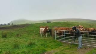 На шотландской ферме