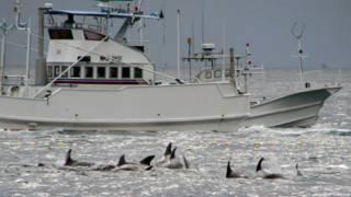 Navio japonês em caça às baleias / Crédito: AP