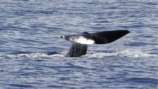 La Commission baleinière internationale a refusé la création d'un sanctuaire de baleines dans l'Antarctique sud.