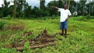 Desmatamento na Libéria (AFP)