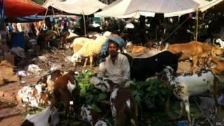 बकरी बाज़ार