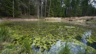 Didymo presente en el río