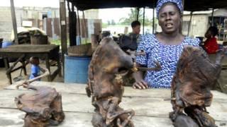इबोला वायरस की वजह, चमगादड़ का मांस
