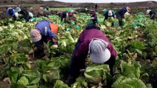 कृषि कामदार