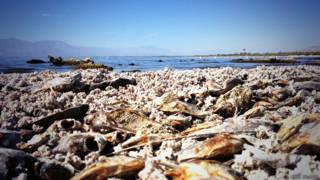 Peces muerto en el mar de Salton, California