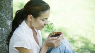 Mujer huele planta de salvia.