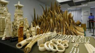 Бивни и изделия из слоновой кости