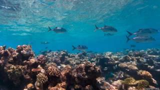 Arrecife de Osprey, en el mar del Coral