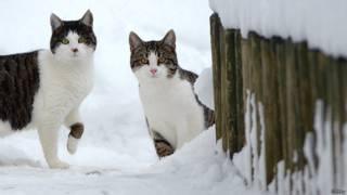 Коты в Швейцарии