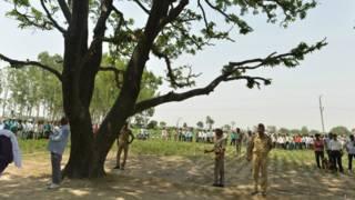 Árbol del que aparecieron colgadas las jóvenes