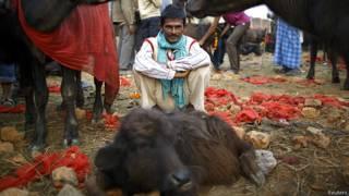 नेपाल का गढ़िमाई मेला