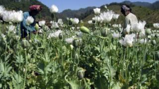 _opium