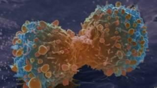 霍普金斯大學的研究人員相信組織細胞再生時突變可能是導致癌症的原因。