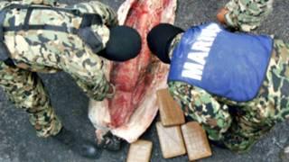 Marinos mexicanos extraen paquetes de cocaína de un tiburón congelado. Foto: Secretaría de Marina