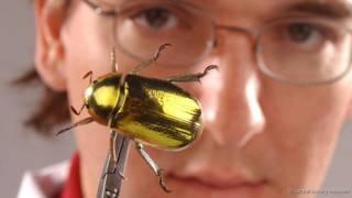 Max Barclay, do Museu de História Natural de Londres