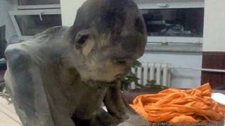 """El monje budista momificado que """"no está muerto"""""""