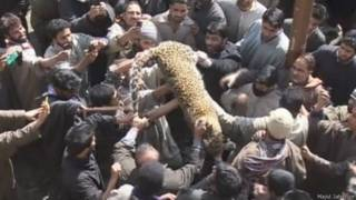 पुलवामा में आदमख़ोर तेंदुआ मारा गया