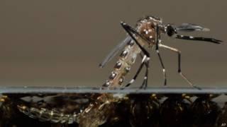 Conheça cinco focos de reprodução do mosquito Aedes aegypti frequentemente ignorados