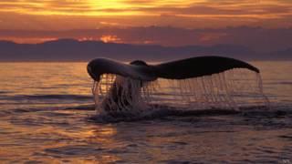Китовый хвост на закате солнца