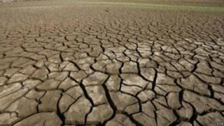 Terra entrou em novo período de extinção em massa, diz pesquisa