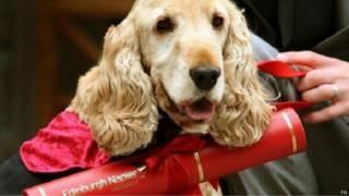 फ़ज नामक कुत्ता, एडिनबरा, ब्रिटेन