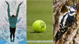 Natación, tenis... un pájaro carpintero