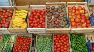 Por que só consumimos 0,06% das plantas comestíveis do planeta?