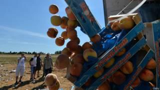 Рабочие выбрасывают персики из грузовика