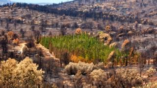 Parcela experimental de cipreses afectada por el incendio de Andilla en 2012