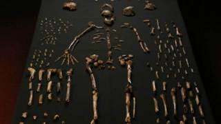 العظام المكتشفة