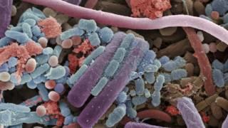 Microbiota de la boca humana. Cortesía del museo Micropia, Photo ANP.