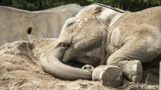 Cientista brasileira desvenda mistério de relação entre tamanho do cérebro e horas de sono