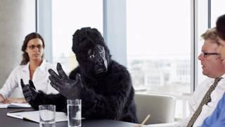 Самозванец в облике гориллы на деловом совещании