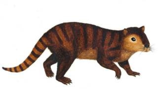 Cientistas descobrem mamífero que sobreviveu à extinção dos dinossauros