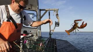 Pesca de lagosta (AP)