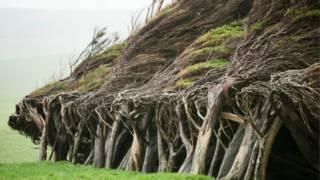 Согнутые веторм деревья