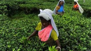 केरल चाय बागान मज़दूर