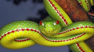 لماذا لا يخاف الأطفال من الثعابين؟