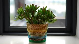 5 plantas que a Nasa recomenda para purificar o ar da sua casa
